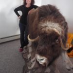 Better a stuffed musk ox than no musk ox at all...